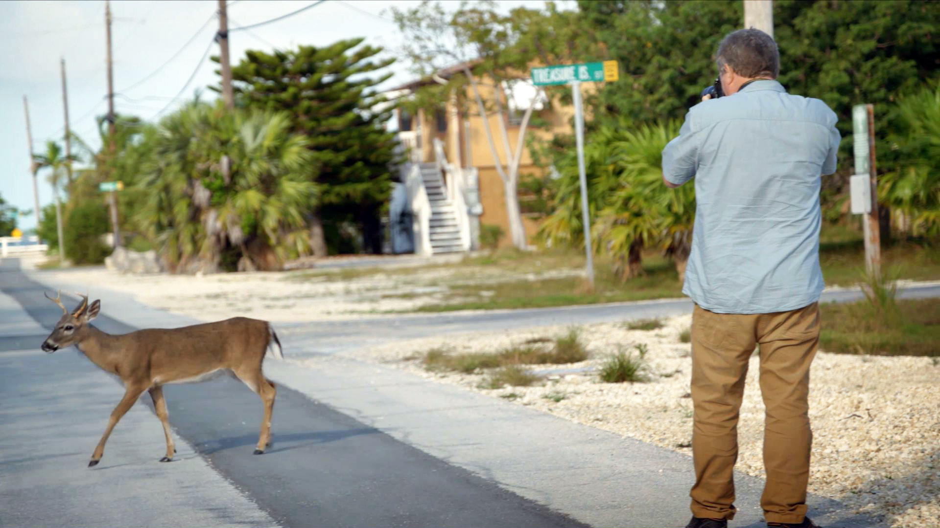 Creature Clip: Florida Key Deer