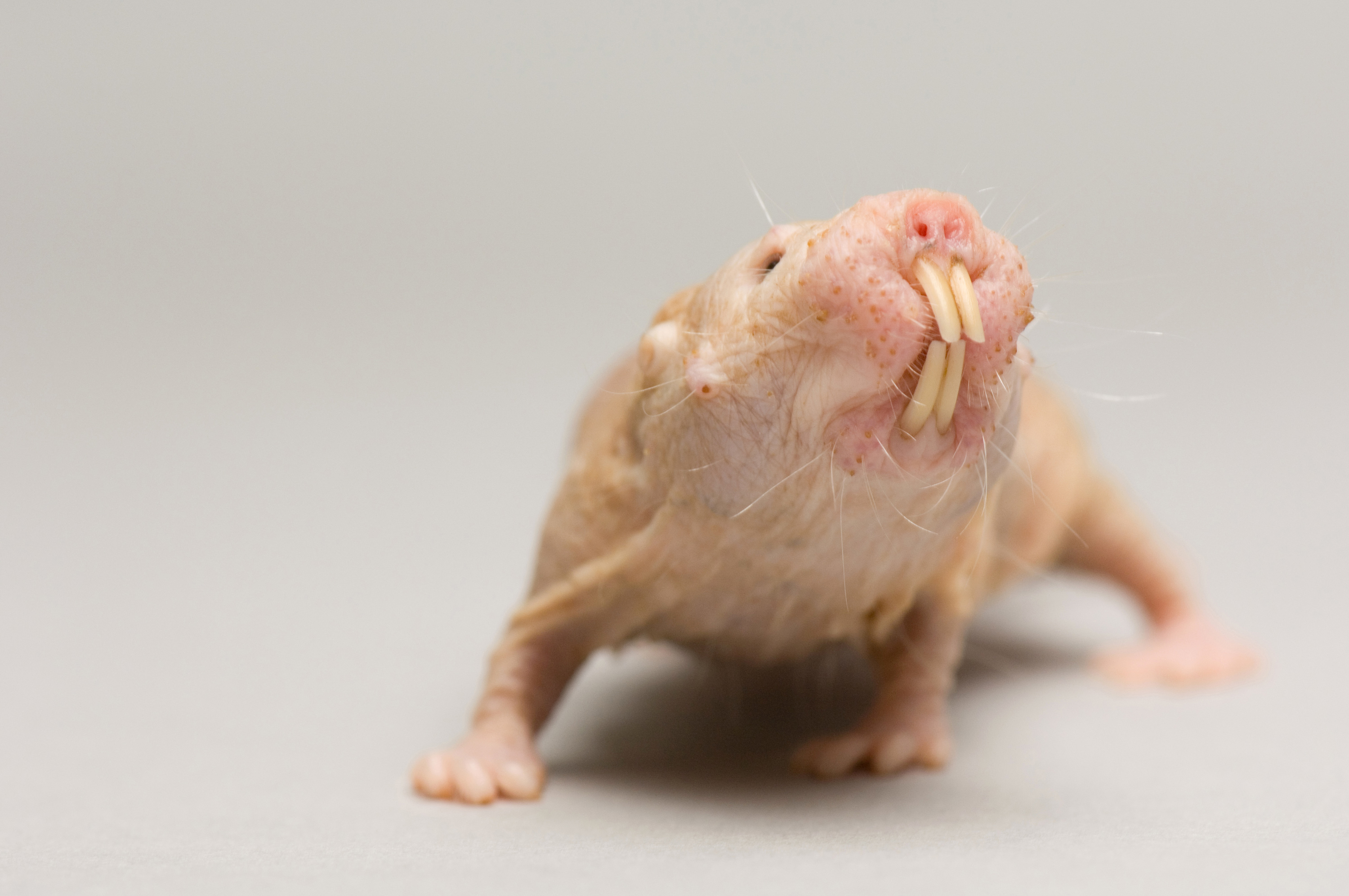 as-naked-mole-rats-with-places-for-teens-to-have-sex