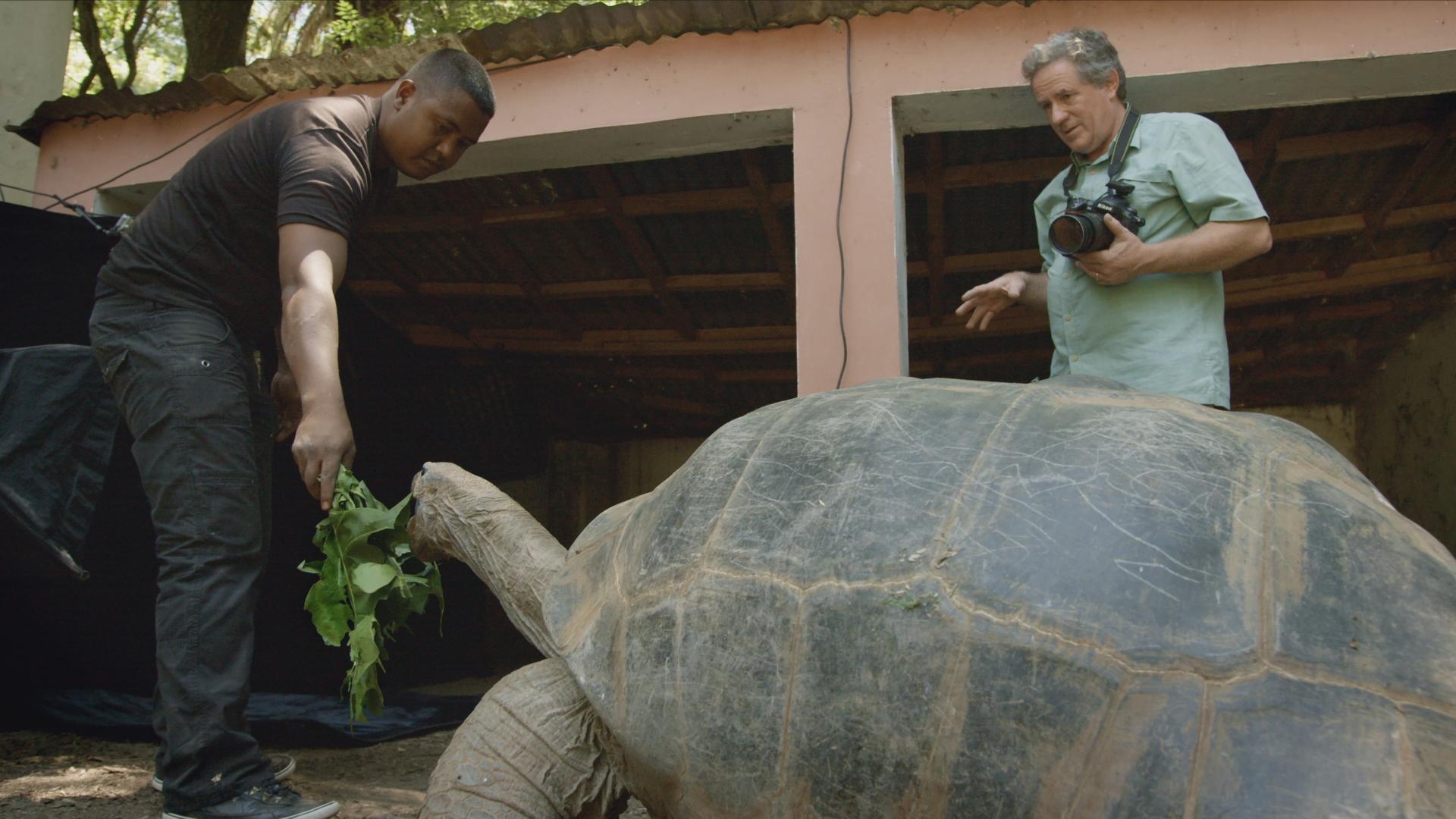 Aldabra Giant Tortoise - Geochelone gigantea