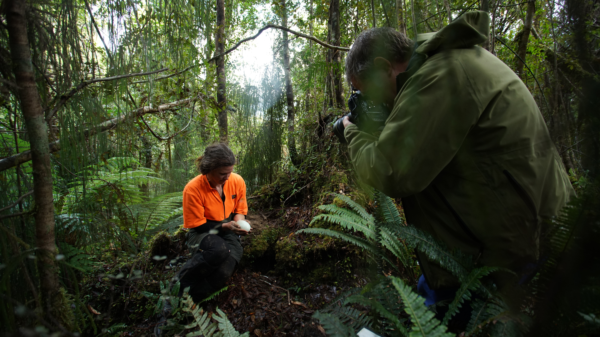 Episode 3 Preview - 0:30 - Travel with photographer Joel Sartore as he adds vibrant insects to his Photo Ark collection and searches for larger animals in Budapest and Prague. Joel also tags along on a Rowi kiwi egg rescue in New Zealand.