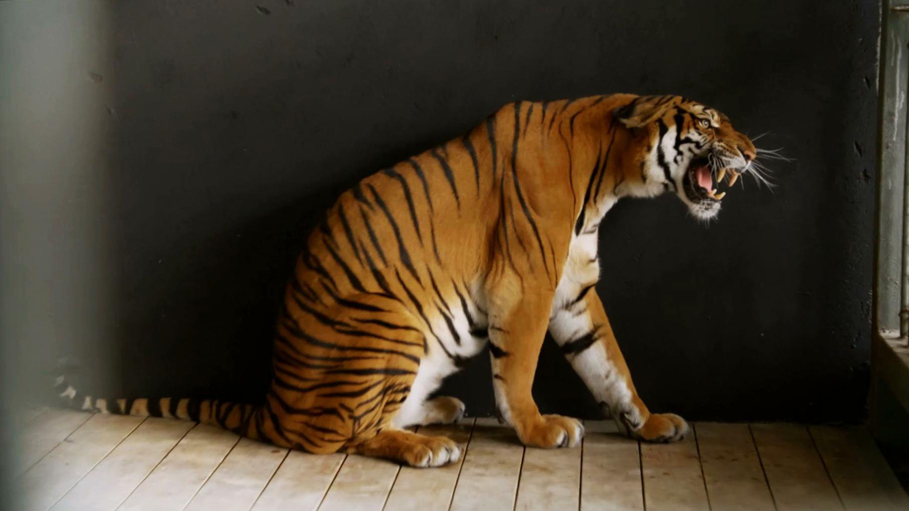 Lighting the South China Tiger
