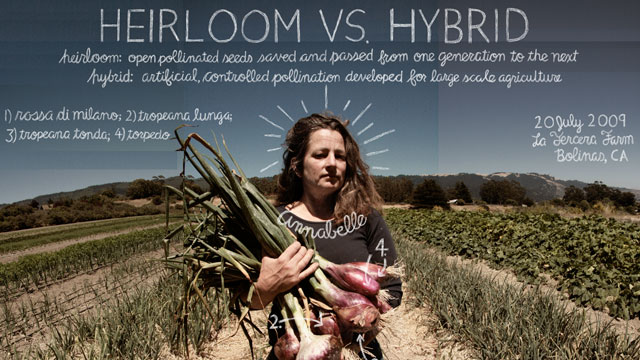 Heirloom vs Hybrid