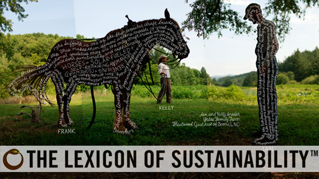 another word for sustainable