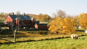 Glynwood is a sustainable farm in Cold Springs, NY.