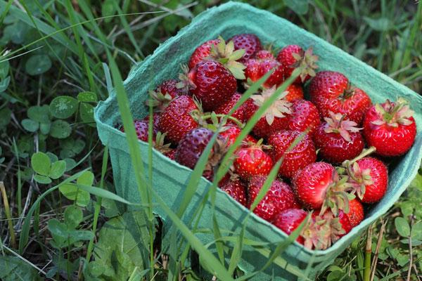 Strawberry Basil Tart recipe