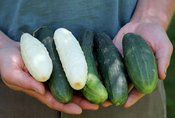 minty-cucumber-cantaloupe-salad-2