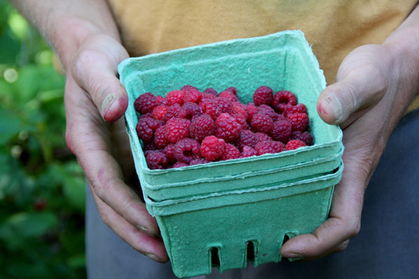 Raspberry Semifreddo