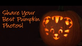 Facebook-Pumpkin-Cover-Photo-Feat