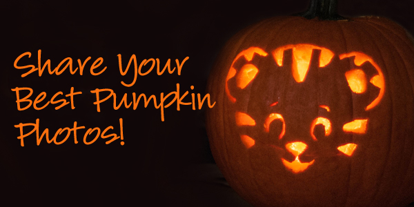 Facebook-Pumpkin-Cover-Photo
