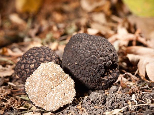 History of Edible Mushrooms