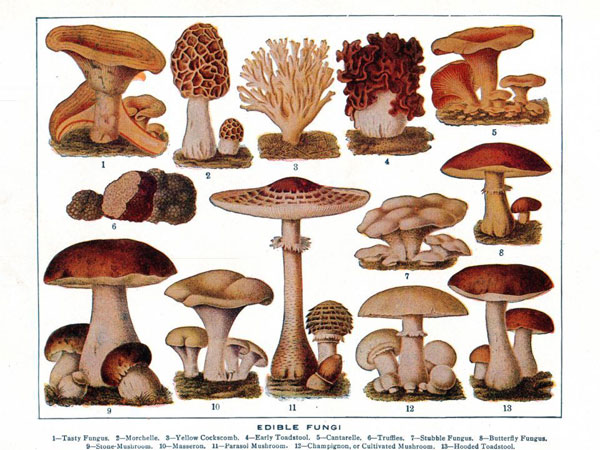 History of Edible Mushrooms