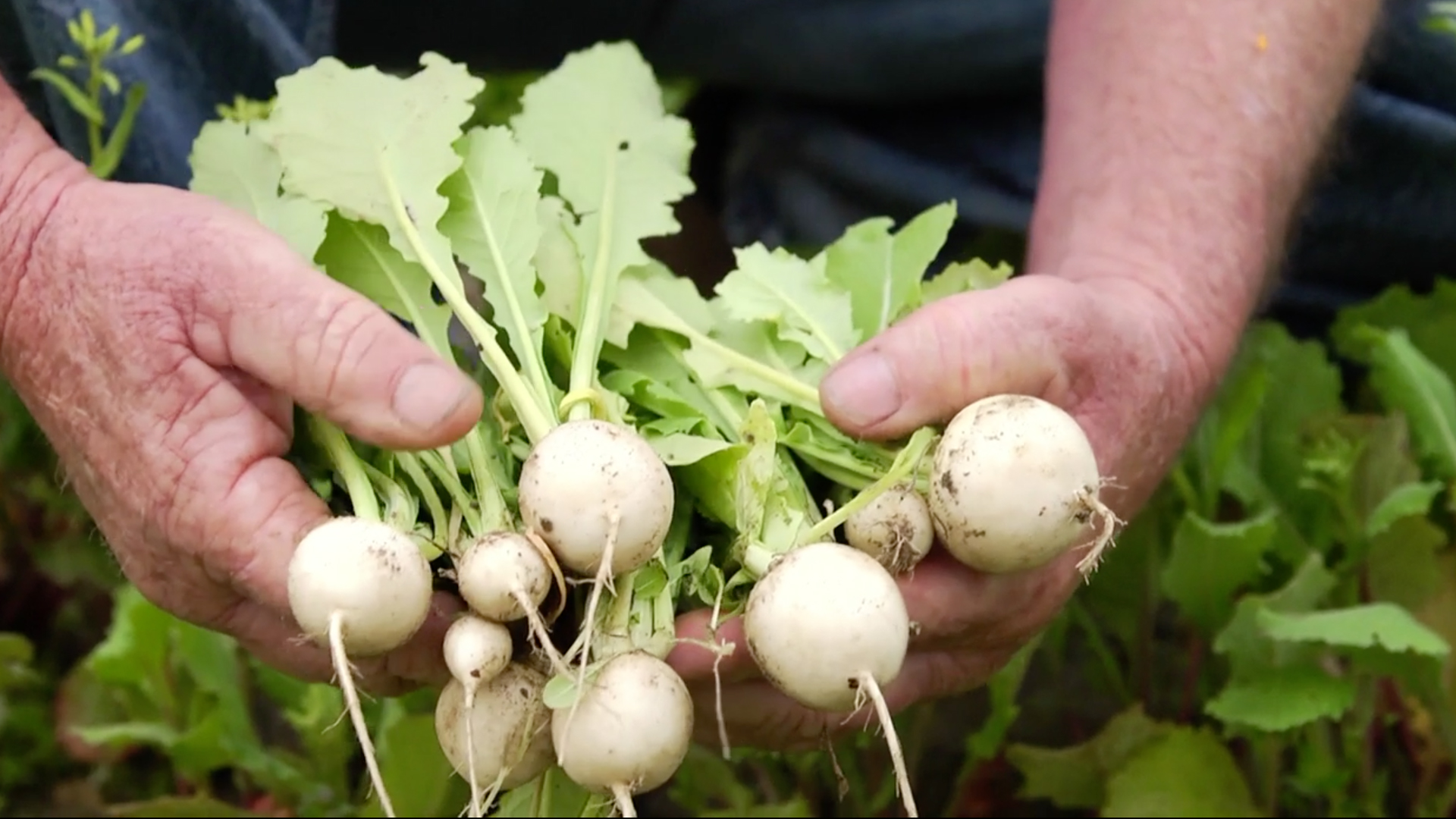 A Chef's Life - Episode 9: Turnips: the Roots