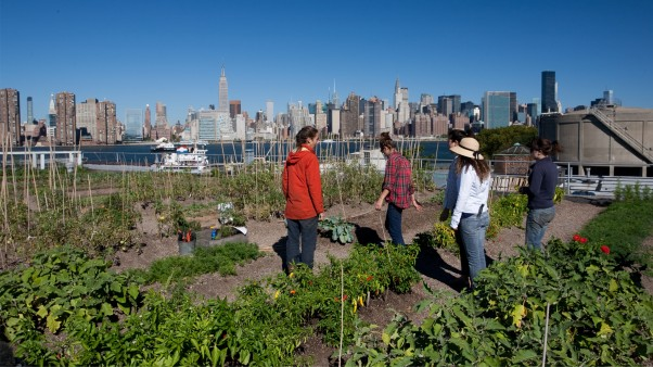 Food Forward - Pilot: Urban Farming