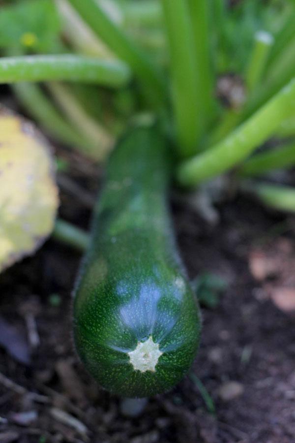 zucchini-cheddar-hand-pies-2