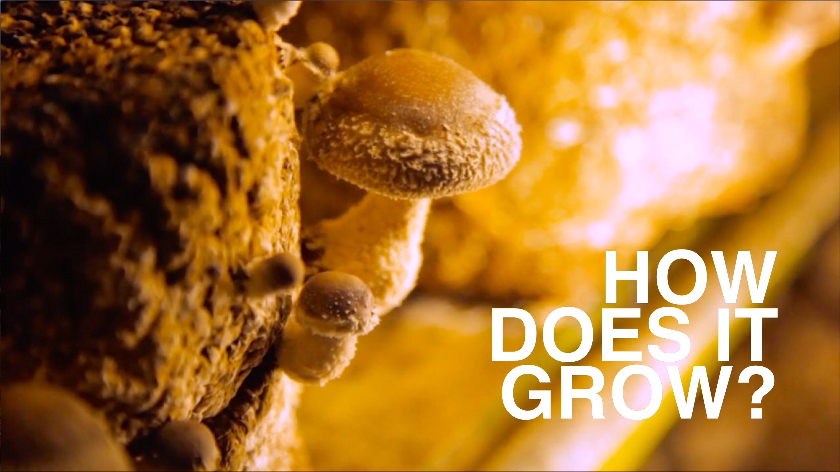 How Does It Grow: Mushrooms