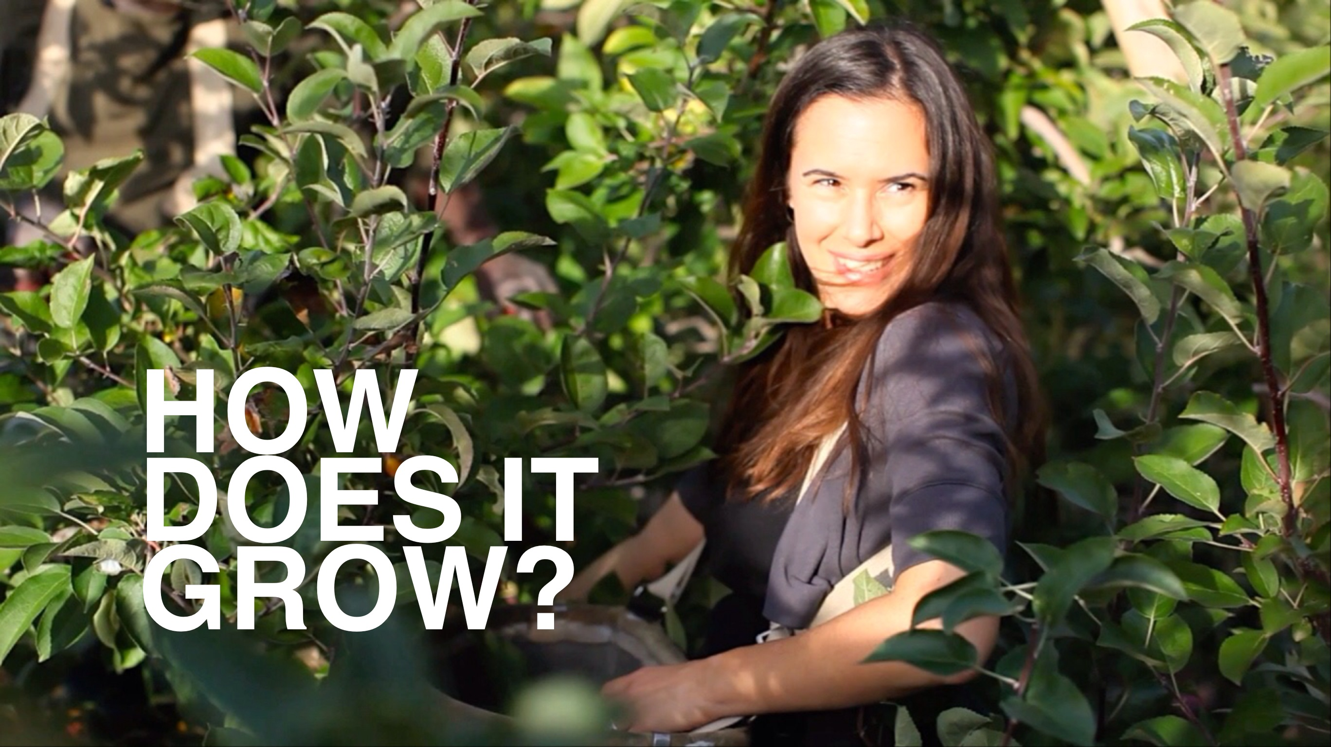 How Does It Grow: Apples