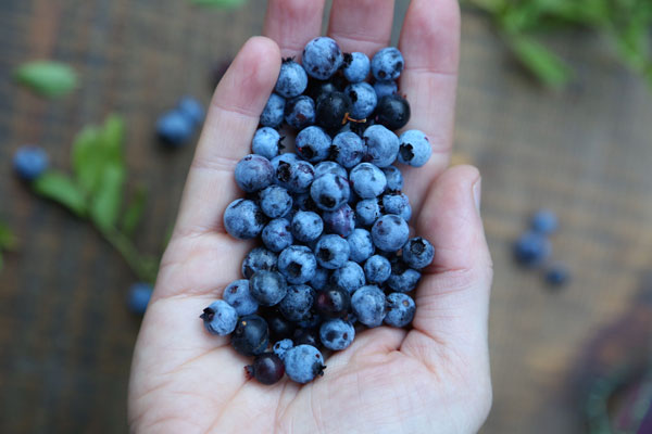 Wild Blueberry Frozen Yogurt recipe