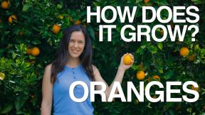 oranges-min