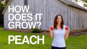 peach thumb-min