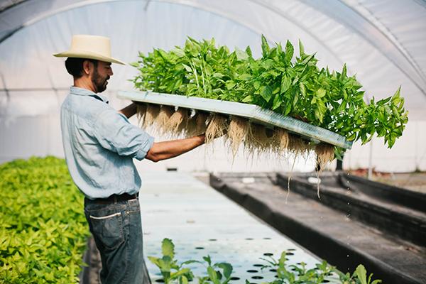 Edgar Farming
