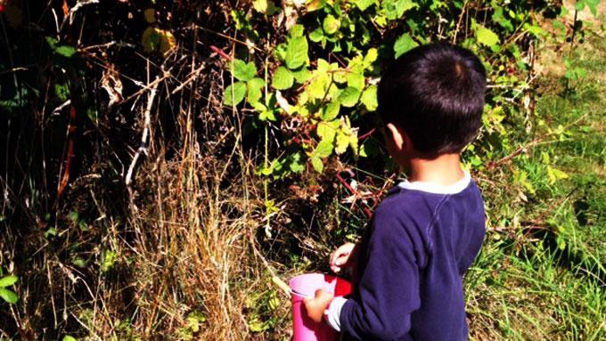 picking-blackberries