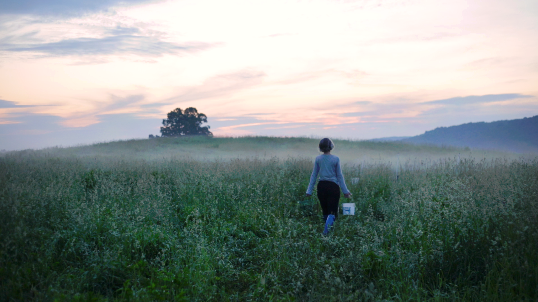 Alanna-Field
