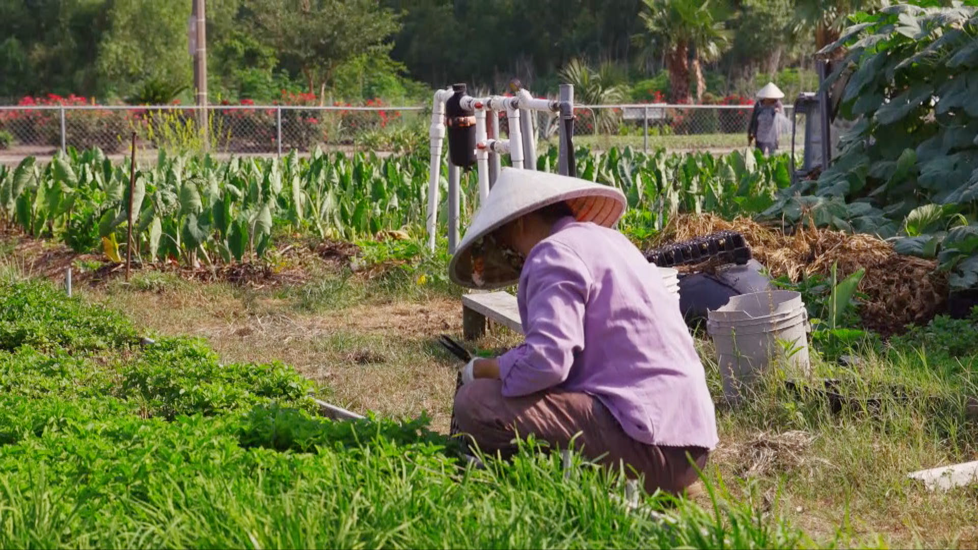 No Passport Required: Bringing Traditional Vietnamese Farming to New Orleans