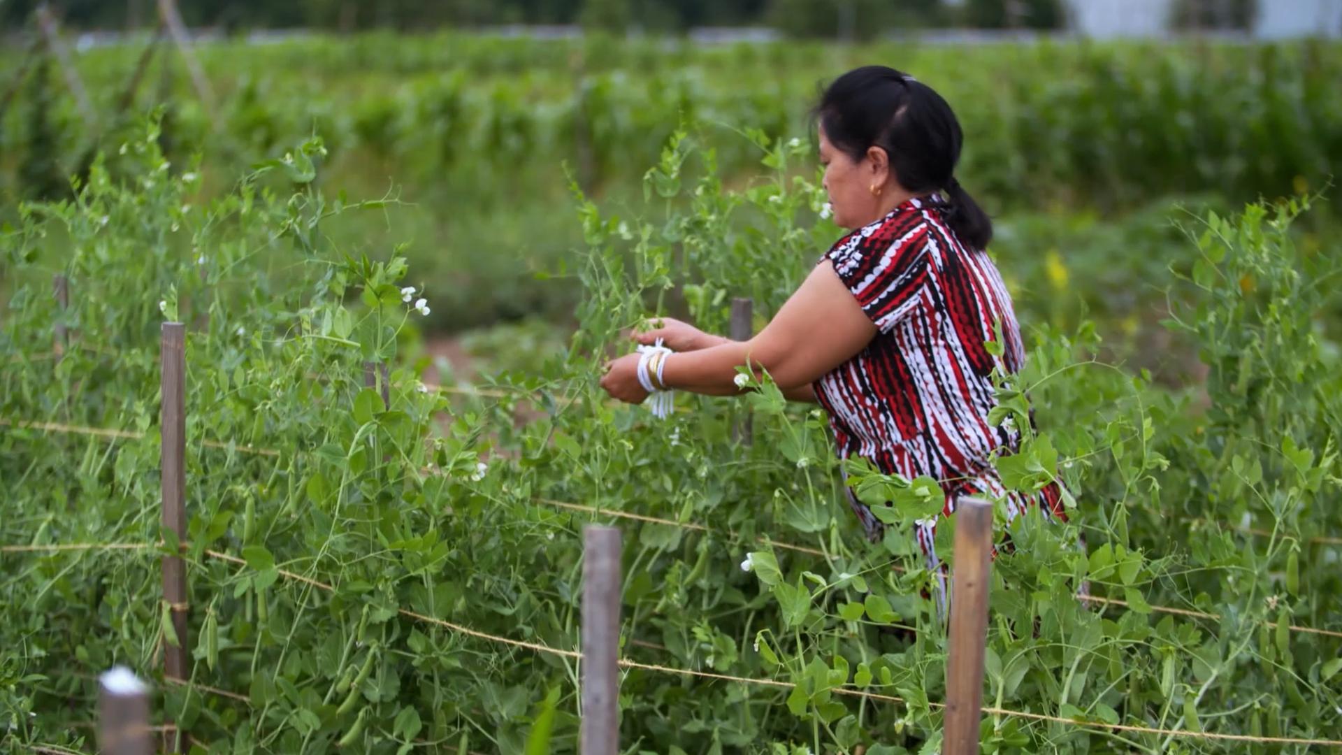lidia in Hmong garden