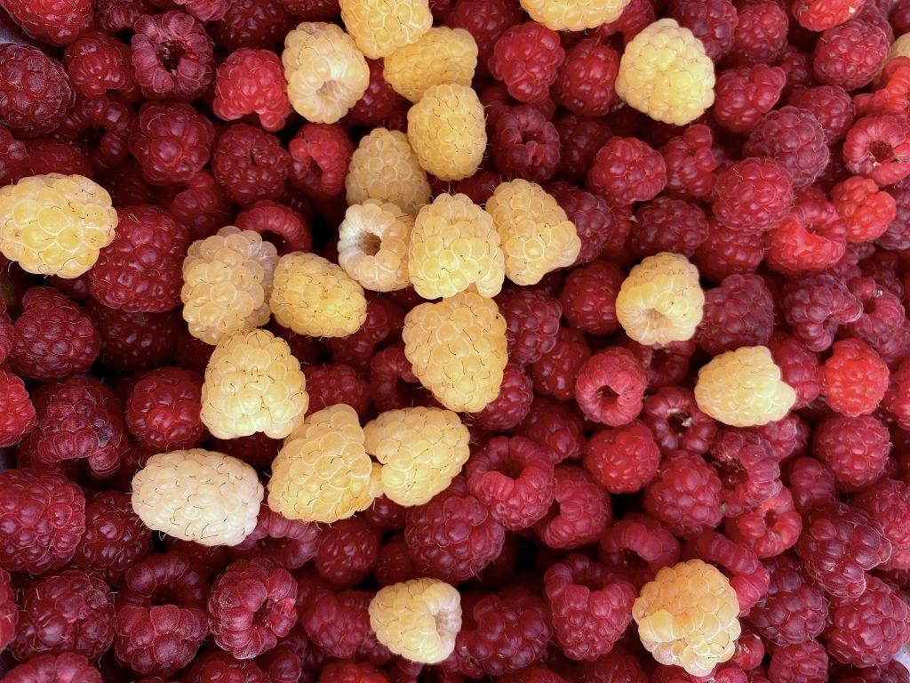 Home Grown Raspberries