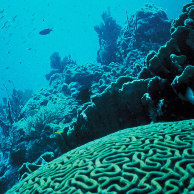 Coral Reef, in bluish tint, credit: USFWS/Jerry Reid