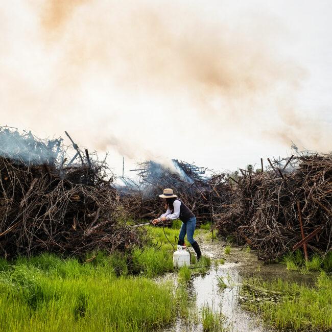 Winemaker Vanessa Robledo control-burning her dry grapevines