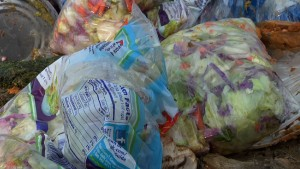lettuceintrash