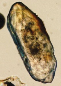 A light-optical microscope image of a zircon. Photo by Wikimedia user Chd