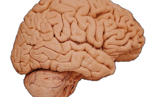 Researchers found that your brain's cognitive reactions begin to slow down at age 24.