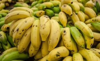 Cavendish banana from Maracaibo. Photo by Wilfredor.