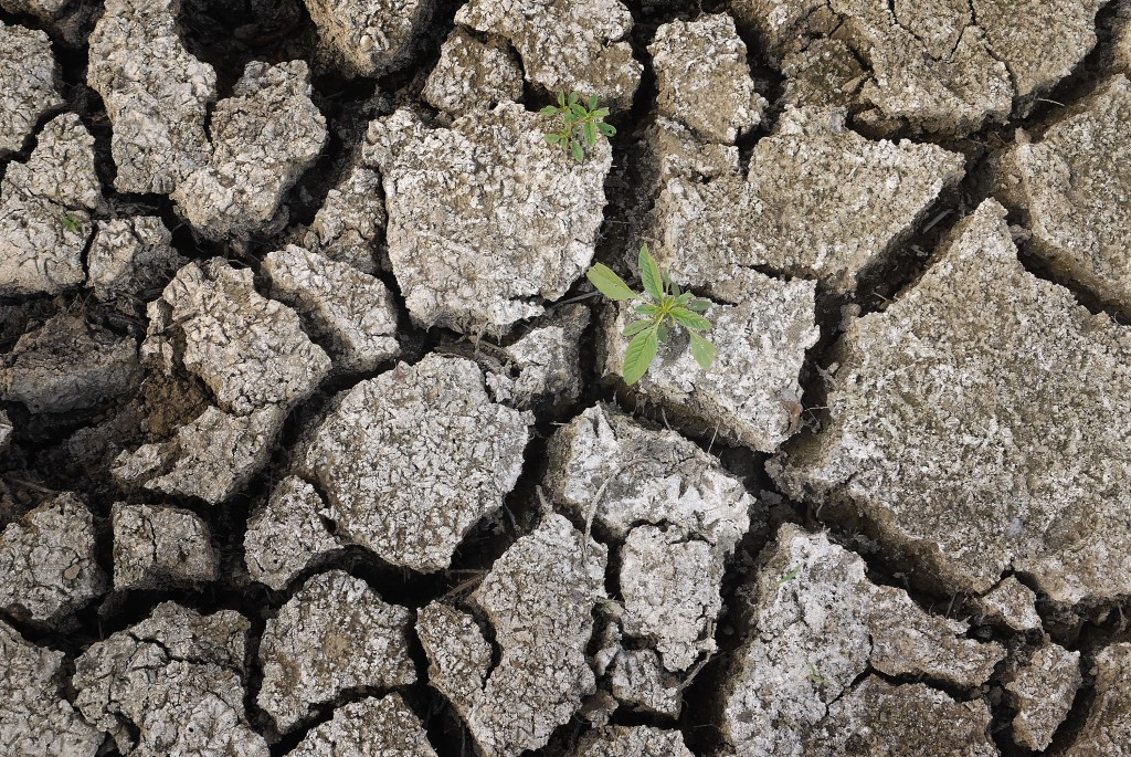 A weed grows through the dry earth at Marion Kujawa's pond which he uses to water the cattle on his farm on July 16, 2012 in Ashley, Illinois. Photo by Scott Olson/Getty Images