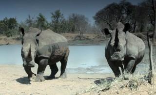 Rhinos - v2 - 05_16_14 - 440p