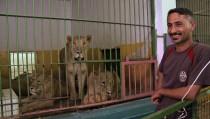 Saddam's lions