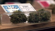 Recreational marijuana for sale in a Colorado cannibs shop. Photo by PBS NewsHour