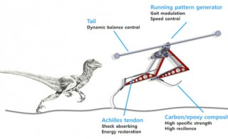 "Velociraptor-inspired robot, designed by the Korea Advanced Institute of Science and Technology, uses Achilles tendons to absorb shock and a ""tail"" to give it balance. Photo courtesy KAIST/Youtube"