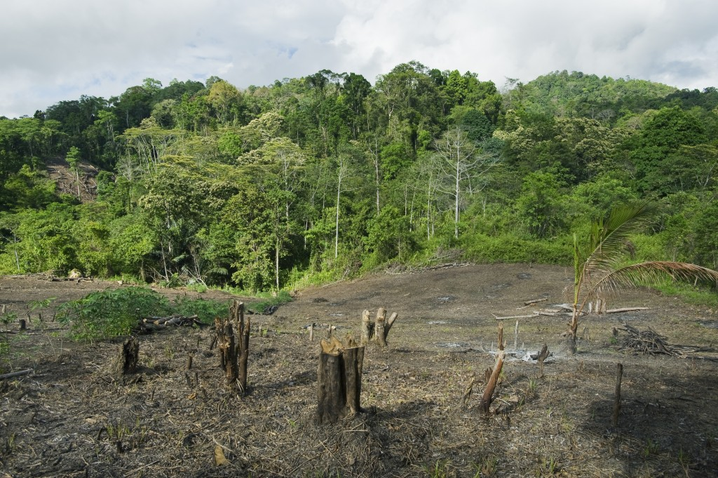 Rainforest clearing for slash and burn agriculture, central Sulawesi, Indonesia