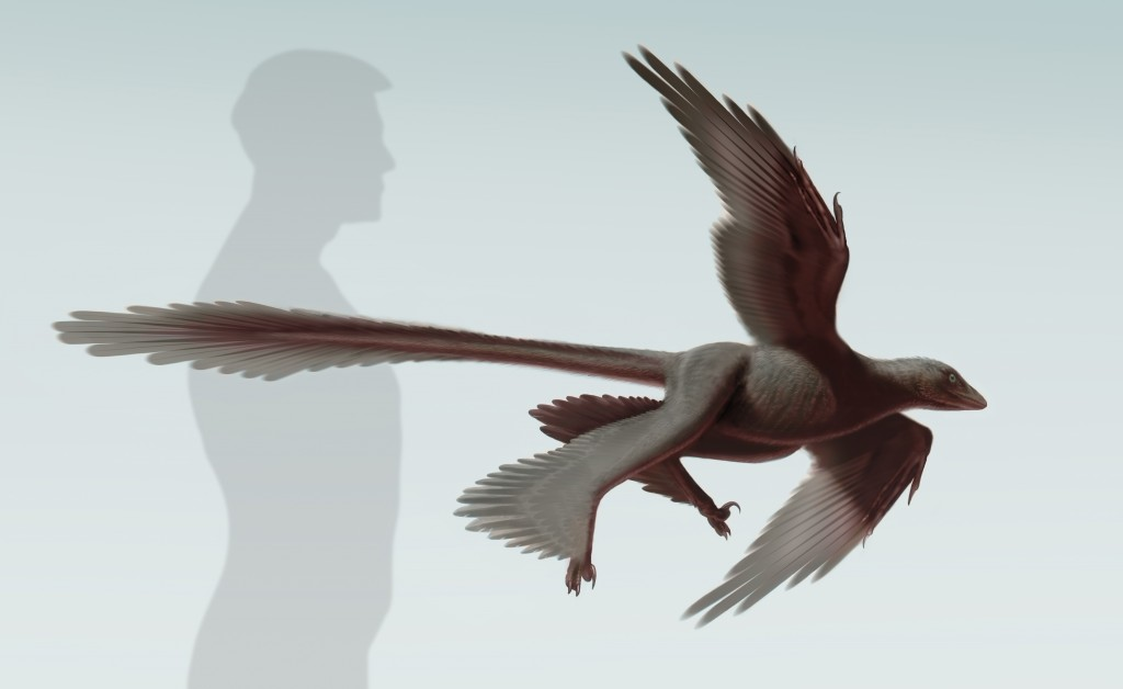 Illustration of Changyuraptor yangi. Image from S. Abramowicz/ Dinosaur Institute, NHM
