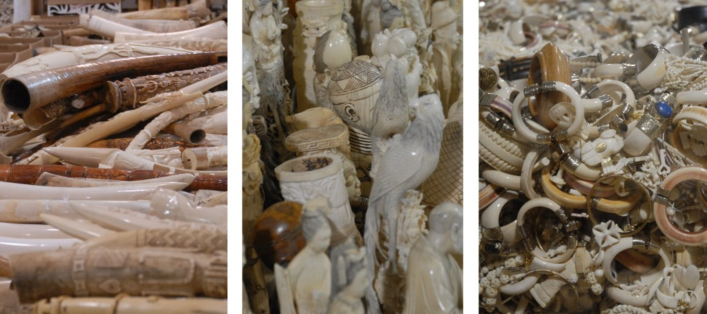 George Wittemyer of Colorado State University, the study's lead author, says increased demand for ivory derived from elephant tusks is behind the dramatic surge in illegal poaching. Photo by flickr user USFWS Mountain-Prairie