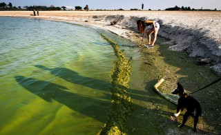 Eden Rogers, 13, uses a stick to try and scoop algae off the shoreline of lake Erie near Oregon, Ohio on August 3, 2014. Photo by Ty Wright/ The Washington Post