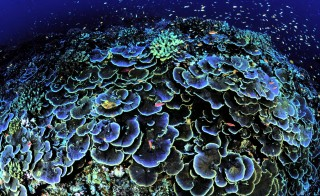 Coral reefs near Jarvis Island. The reefs are part of the Pacific Remote Islands Marine National Monument, which President Obama pledged to expand and protect from fishing and drilling. Courtesy Jim Maragos via the U.S. Fish and Wildlife Service