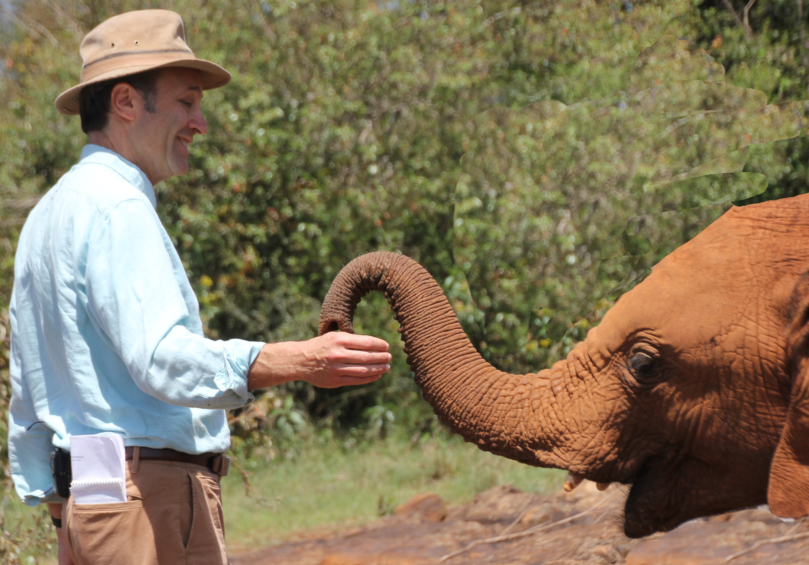 Senior correspondent Jeffrey Brown plays with an elephant at the David Sheldrick Wildlife Trust in Nairobi National Park. Photo by Molly Raskin