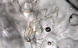 "Microscopic algae hidden in the Arctic sea ice may be the base for all marine sea life. But they may also be ""canaries in the coal mine"" for climate change. Photo by Science Nation/National Science Foundation"