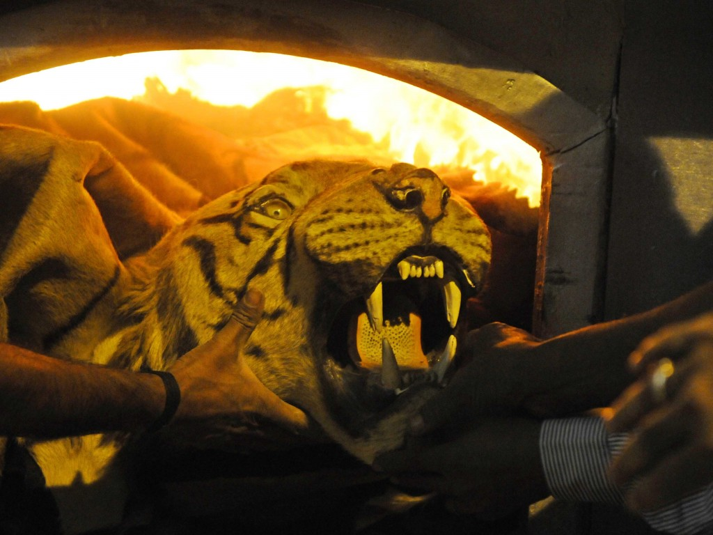 Indian Zoo Authorities Set Fire To Stockpile Of Illegal Wildlife Parts