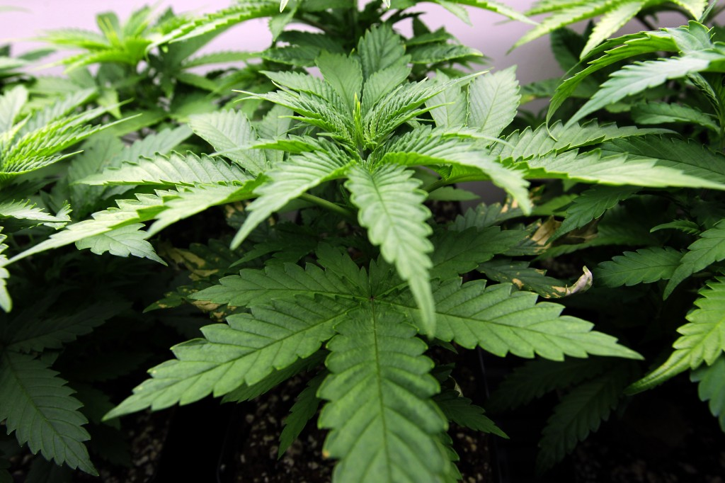 Ohio voters today decide whether or not to legalize marijuana for recreational and medical use.