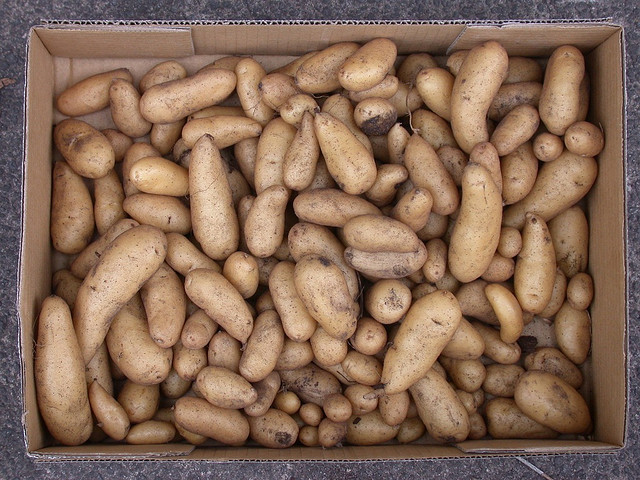 White potatoes may be included as part of the Women, Infants and Children nutrition program, also known as WIC, if the Congressional spending bill is passed as written. This would be the first time that the white potato has been part of the WIC program. Photo by Glenn/Flickr Creative Commons